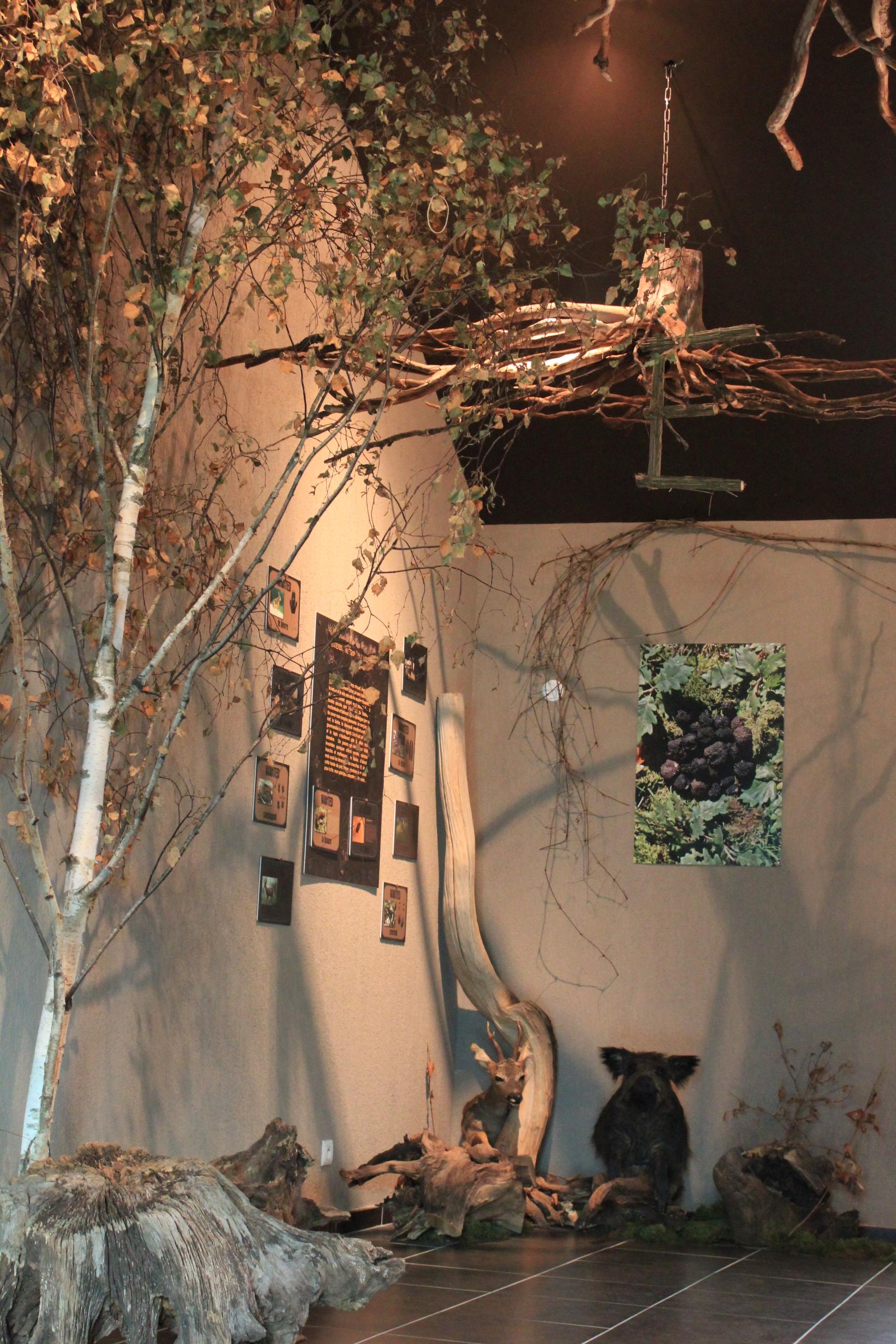 salle d''exposition - Maison aux mille truffes et champignons © Céline Sachot
